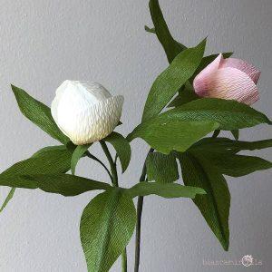 Peonia boccioli fiori di carta